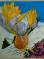 mountaincrocus